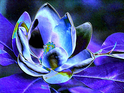 Photograph - Blue Foil Magnolia by Carolyn Jacob
