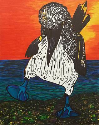 Boobies Drawing - Blue Footed Booby Bird In The Sunset by Morgan Carroll