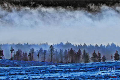 Photograph - Blue Forest by Blake Richards