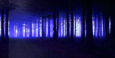 Photograph - Blue Forest by Mark Blauhoefer