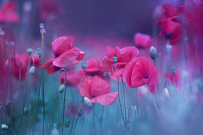 Purple Flowers Photograph - Blue Garden Poppies by Magda  Bognar