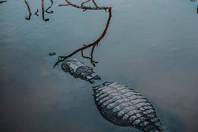 Photograph - Blue Gator by Josy Cue