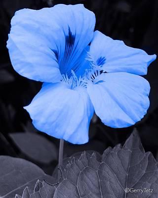 Photograph - Blue by Gerry Tetz
