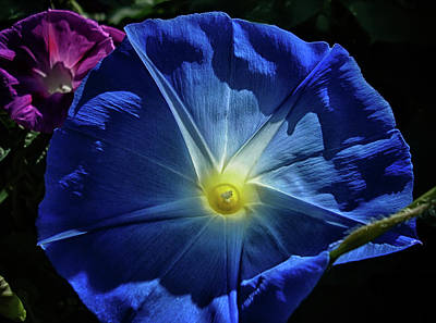 Photograph - Blue Glory by Camille Lopez