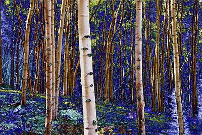 Photograph - Blue Gold Aspens by Lanita Williams