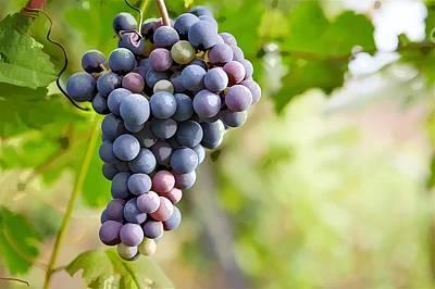 Blue Grape Art Print