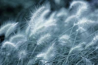 Blue Gras Art Print by AugenWerk Susann Serfezi