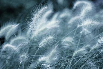 Susann Serfezi Photograph - Blue Gras by AugenWerk Susann Serfezi