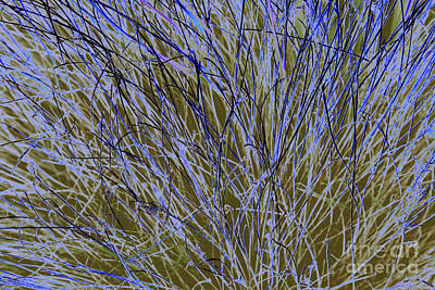 Photograph - Blue Grass by Nareeta Martin