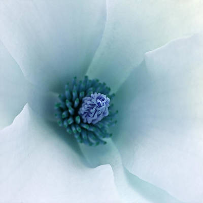 Photograph - Abstract Blue Green White Flowers Macro Photography Art Work by Artecco Fine Art Photography