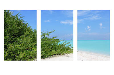 Photograph - Blue-green-white Triptych by Jenny Rainbow