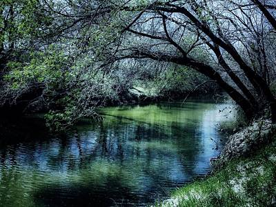 Photograph - Blue Green Wilderness by Michele Carter