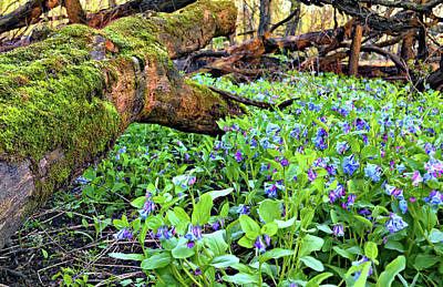 Photograph - Blue Green Woodland by Bonfire Photography