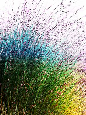 Photograph - Blue Green Yellow Grasses by Joseph Frank Baraba