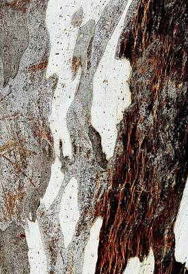 Photograph - Blue Gum Bark Abstract 1 by Denise Clark