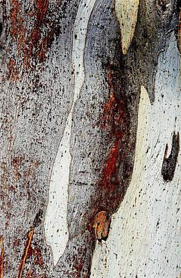 Photograph - Blue Gum Bark Abstract 2 by Denise Clark