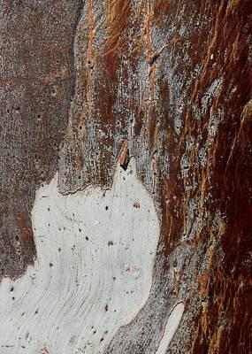 Photograph - Blue Gum Bark Abstract 3 by Denise Clark