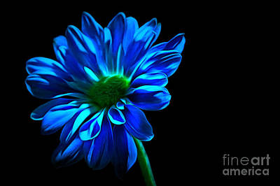 Flower Abstract Photograph - Blue Harmony by Krissy Katsimbras