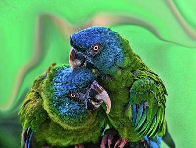 Photograph - Blue Headed Macaws by Allen Beatty