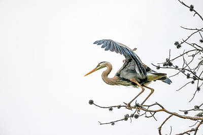 Blue Heron 4 Art Print by Leland D Howard