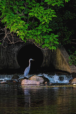Photograph - Blue Heron At Mini Waterfall I by S Michael Basly - PhotoGraphics By S Michael