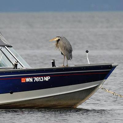 Photograph - Blue Heron Boat Ride by Devon LeBoutillier