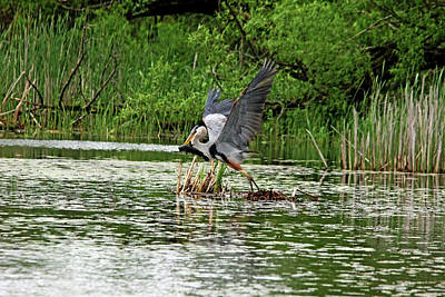 Abstract Works - Blue Heron Catch Of The Day by Debbie Oppermann