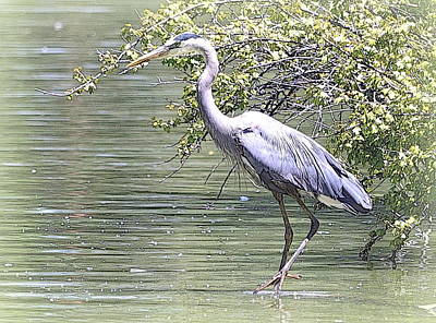 Photograph - Blue Heron by Clarice  Lakota