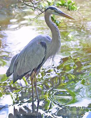 Photograph - Blue Heron by Dodie Ulery