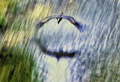 Photograph - Blue Heron Flying Over A Stream 001 by George Bostian