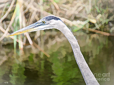 Photograph - Blue Heron Hunting by Judy Kay