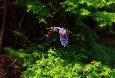 Photograph - Blue Heron In Flight 009 by George Bostian