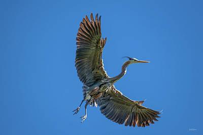 Photograph - Blue Heron In Flight by Leland D Howard