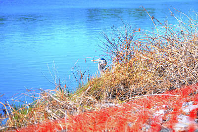 Photograph - Blue Heron In Hiding by Marilyn Holkham