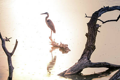 Photograph - Blue Heron In Morning Rain by Dan Sproul
