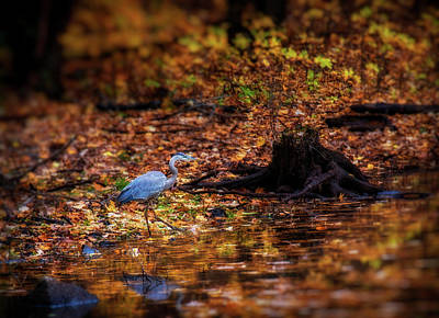 Photograph - Blue Heron by Lilia D