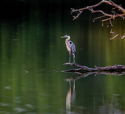 Photograph - Blue Heron Long Exposure by Dan Sproul