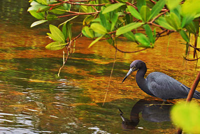 Photograph - Blue Heron by Mark Russell