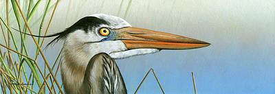 Blue Heron  Art Print by Mike Brown