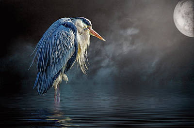 Photograph - Blue Heron Moon by Brian Tarr