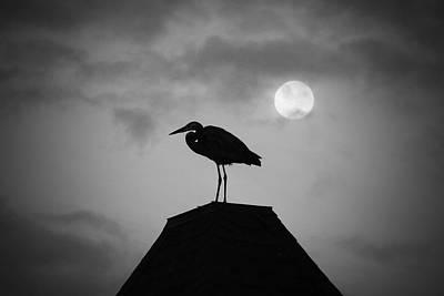 Photograph - Blue Heron Moon by Eddy Mann