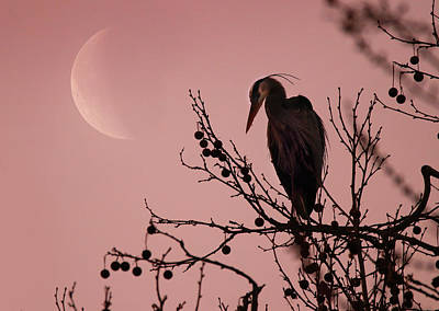 Photograph - The Heron And The Moon by Rob Blair