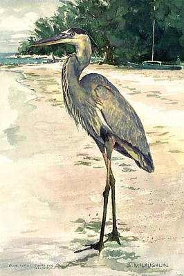 Blue Heron On Shell Beach Art Print