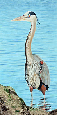 Painting - Blue Heron On The Hunt by Jimmie Bartlett