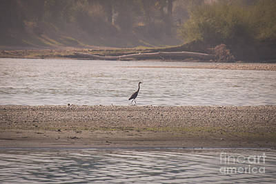 Photograph - Blue Heron On The Yellowstone by Shevin Childers
