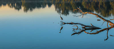 Photograph - Blue Heron Panorama by Dan Sproul