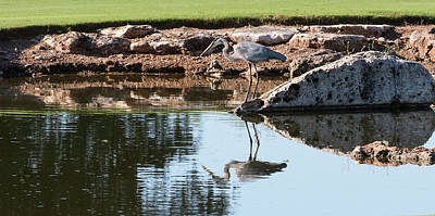 Photograph - Blue Heron Reflection by John Johnson