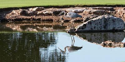 Photograph - Blue Heron Reflection by John Johnson