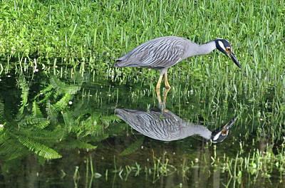 Animal Paintings David Stribbling - Blue Heron Reflection by Kirstin Heinrich