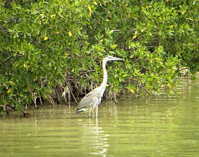 Photograph - Blue Heron by Ric Schafer